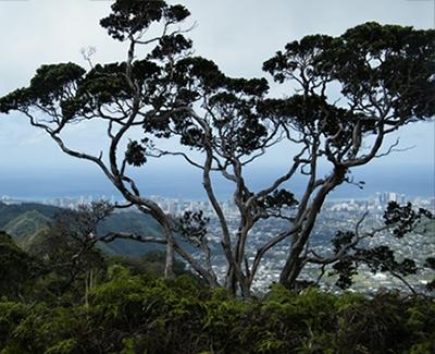 Koa Environmental Consulting